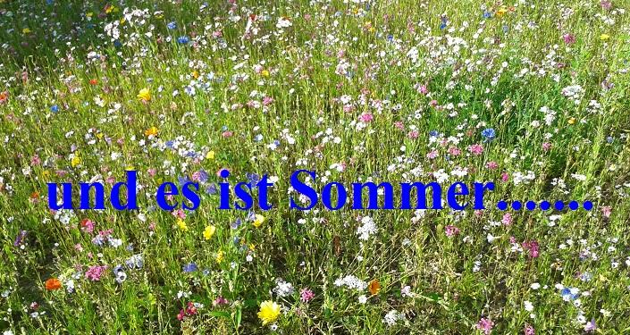 Ein Sommerlied